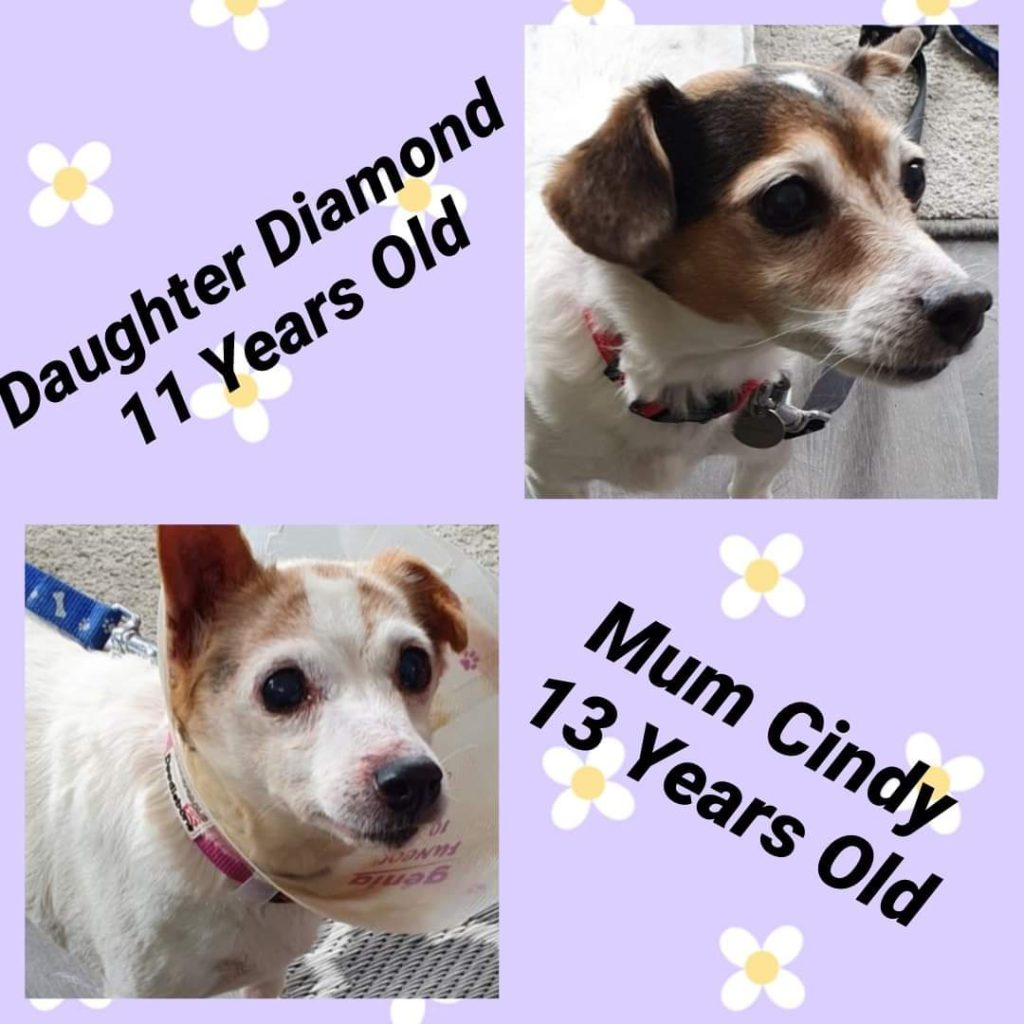 Cyndy and Diamond